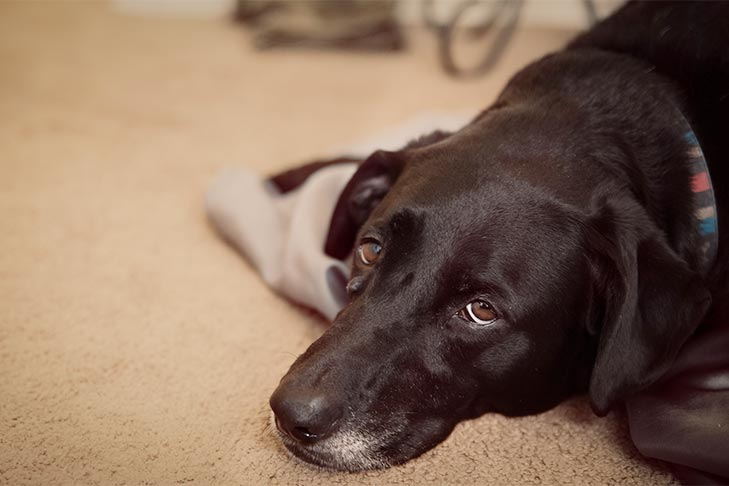 What Does It Mean When a Dog's Nose Is Dry? — Dog Myths Debunked