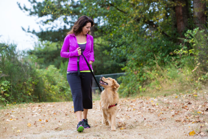 golden retriever on a walk with a woman in a purple jacket