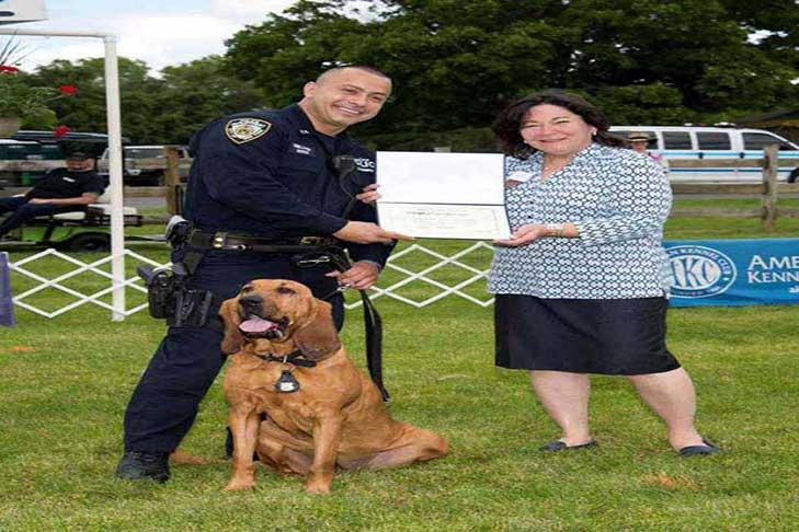 Bloodhound Staten Island KC Canine Officer Hero