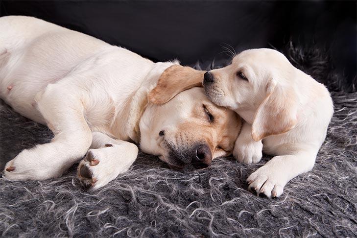 Как скорбят собаки