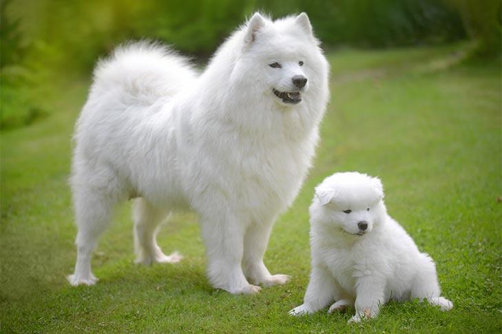 10 Fluffy Dog Breeds: Fuzzy, Long