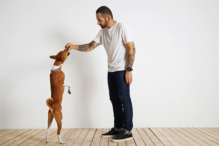how to choose a dog trainer american kennel club