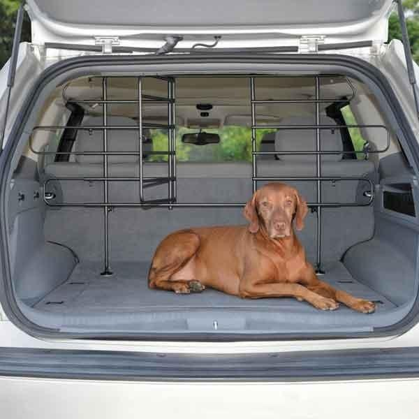 Vizsla laying in the back of a car.