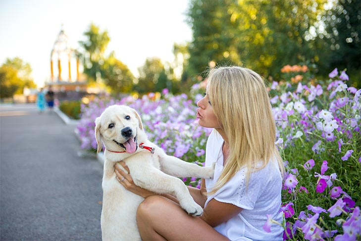 The Power of Proper Socialization — Puppy Training Classes Pay Off