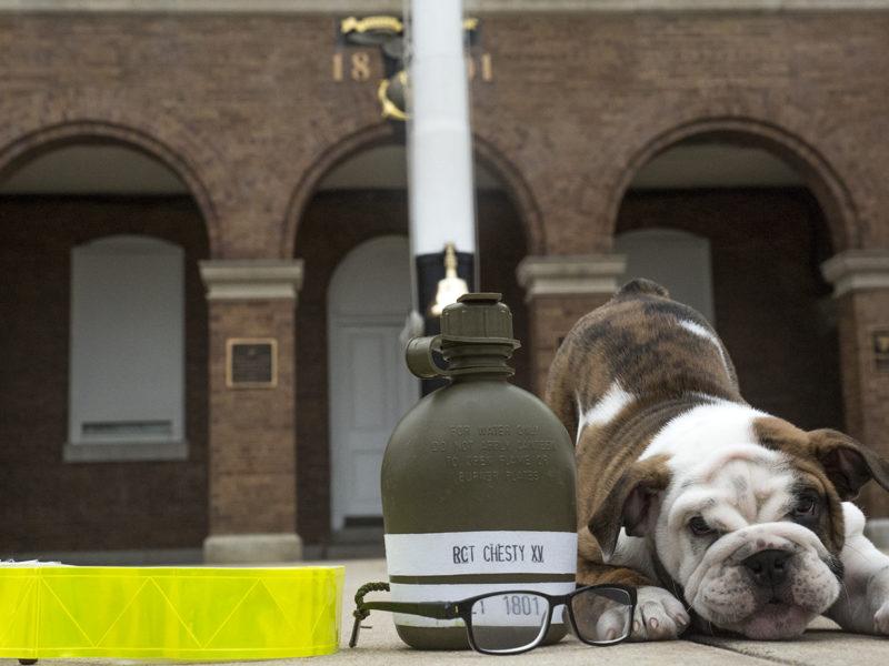 Chesty the Bulldog