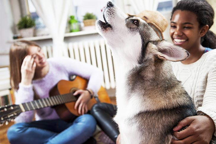 Why Do Dogs Howl to Music? What Does It Mean When a Dog Howls?
