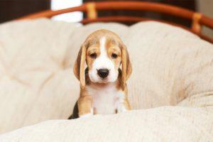 puppy alone