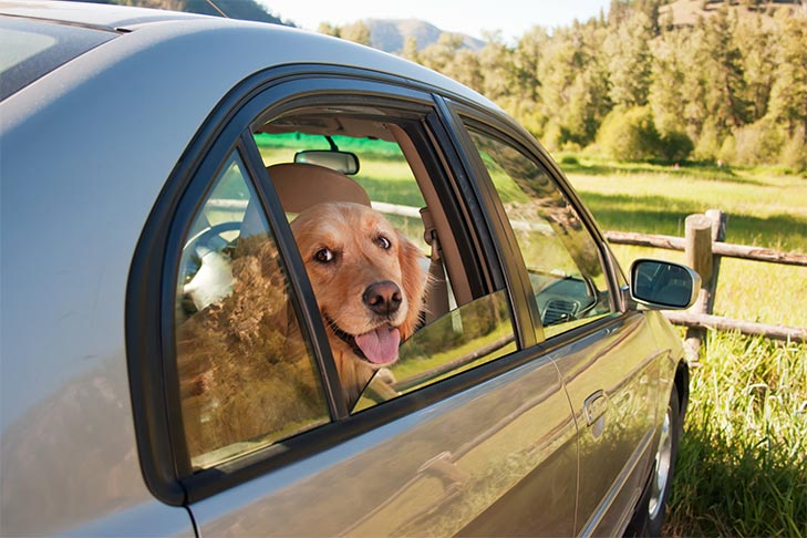 Dogs in Hot Cars: Can I Leave My Dog in the Car If I Crack a