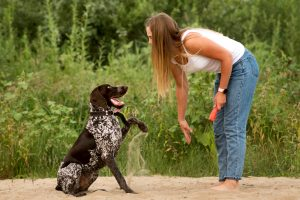 Attractive girl walking the dog. Having fun playing in outdoors. Lovely woman training German Shorthaired Pointer on sandy beach on background of greenery. Concepts of friendship, pets, togetherness