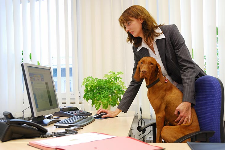 The Pros and Cons of Bringing Your Dog to Work Every Day