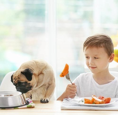 Can Dogs Eat Sweet Potatoes? Are Sweet