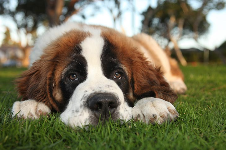 Dog Anxiety: What dog Owners Need to Know