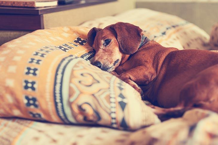 狗狗为他们的人类主人的损失感到悲伤吗?