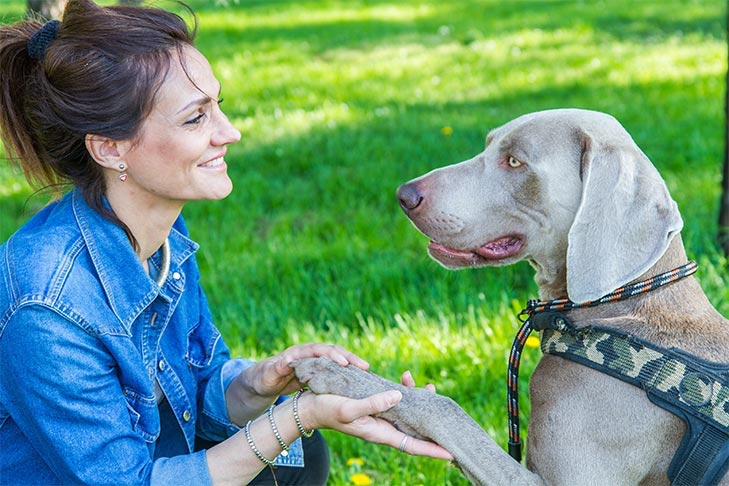 """Weimaraner sitting """"giving paw"""" to a woman outdoors at the park."""