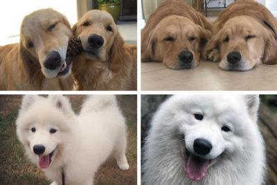 dog stars of instagram