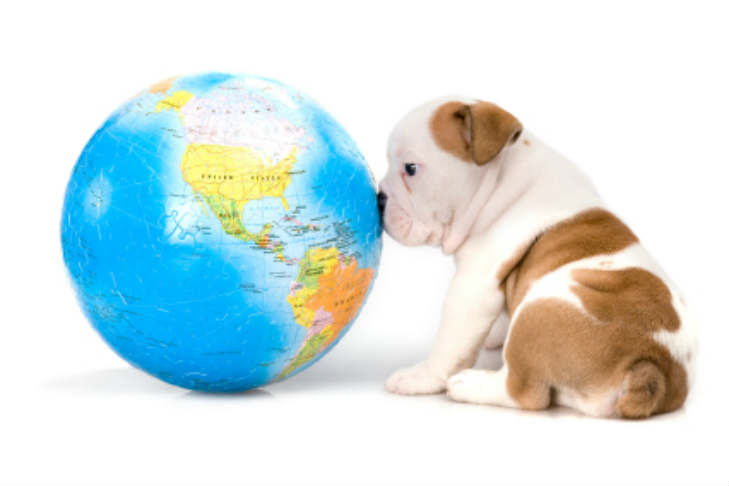 Bulldog Puppy Nose Globe