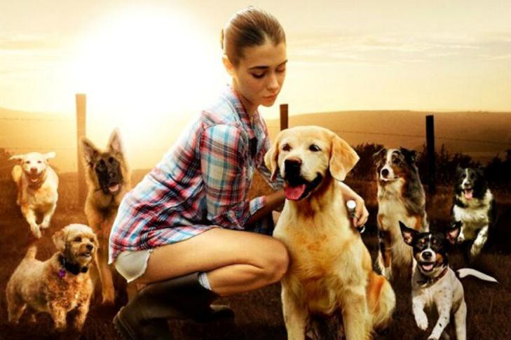 Dog Lover movie