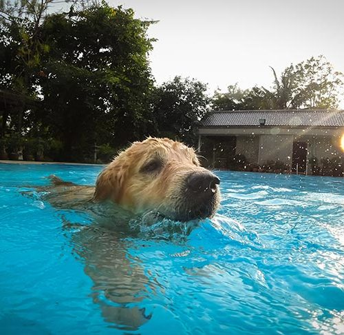 Is Swimming Therapeutic For Senior Dogs American Kennel Club