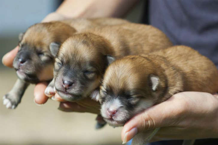 3 puppies in hand