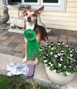Competition Title Update Summer 2018 – American Kennel Club