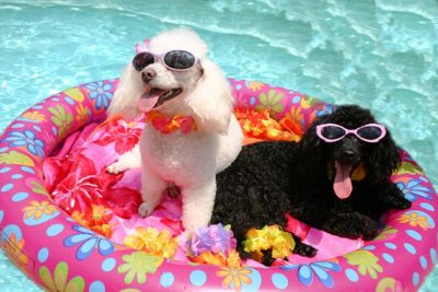 keeping your dog cool