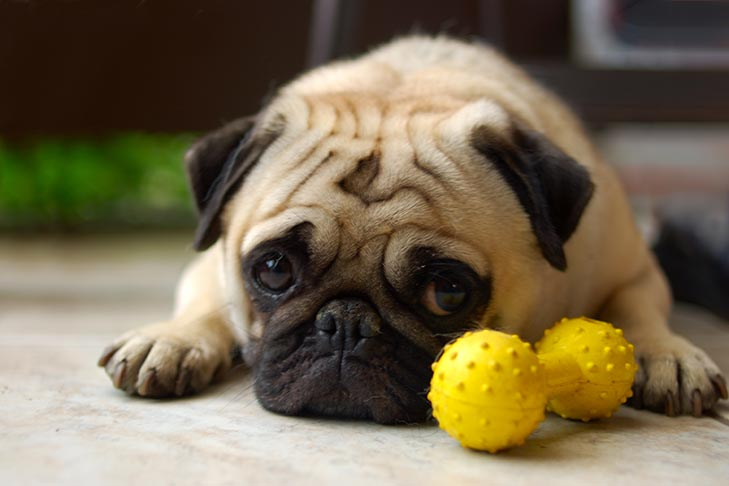 Do dogs really experience guilt?