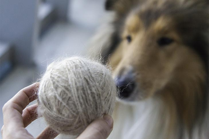 Make Yarn From Dog Hair: Here's How Much You'll Need