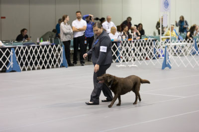 AKC National Obedience Championship
