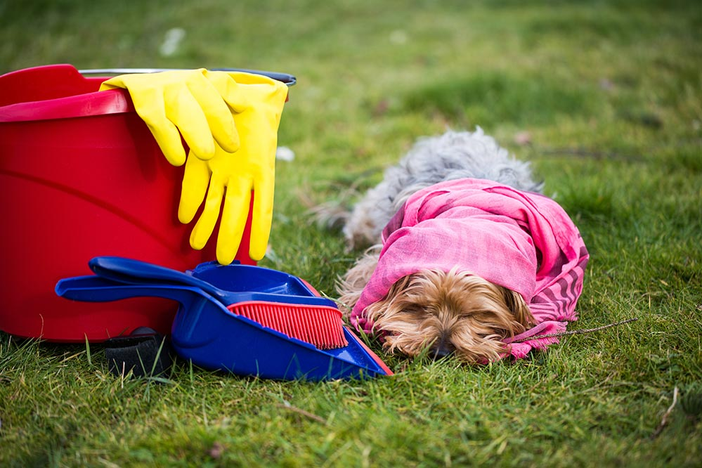 small dog wrapped in a pink rag laying next to bucket with cleaning supplies