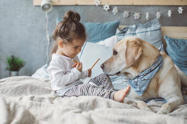 10 Best Family Dogs American Kennel Club