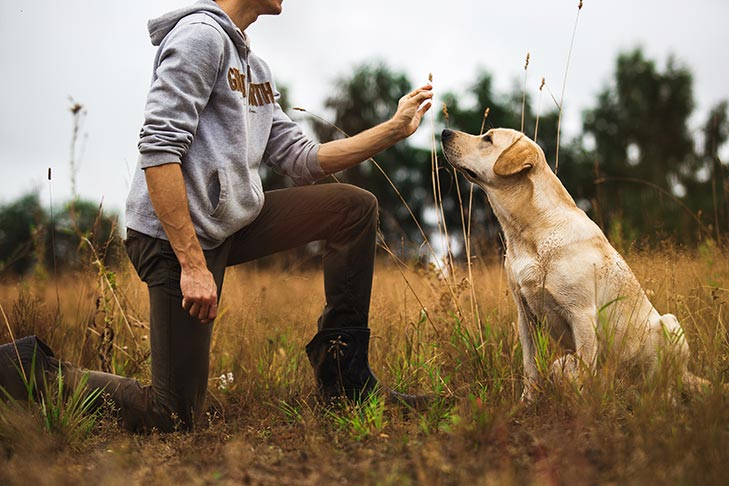 Lure And Reward Training For Dogs Top Tips To Keep In Mind