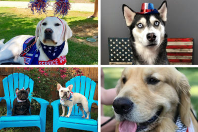 dog stars of instagram