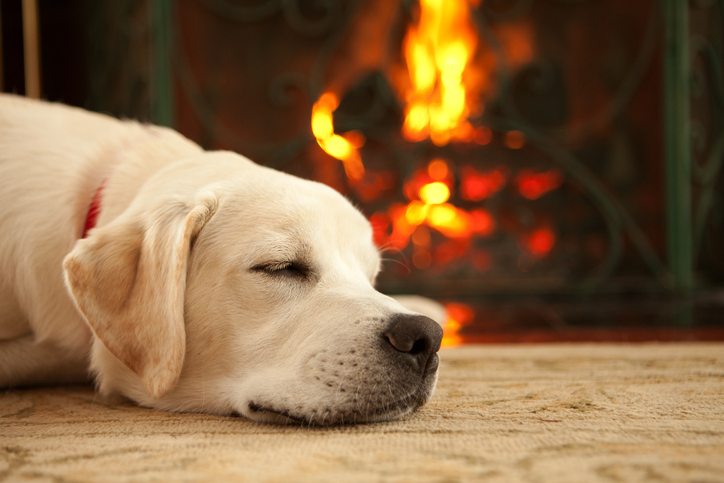 Fire Safety Tips That Will Help Protect You and Your Dog