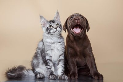 can dogs be allergic to cats
