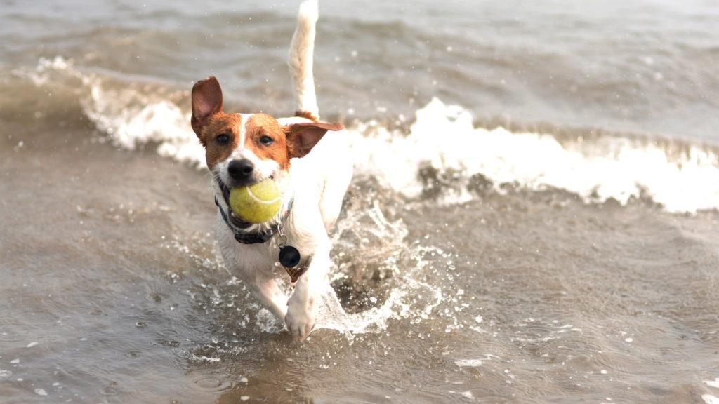 Dogs Drinking Salt Water: Is It Dangerous? — American Kennel