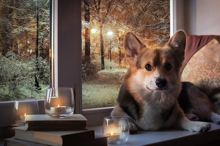 brown, white and black dog laying on window sill next to candles