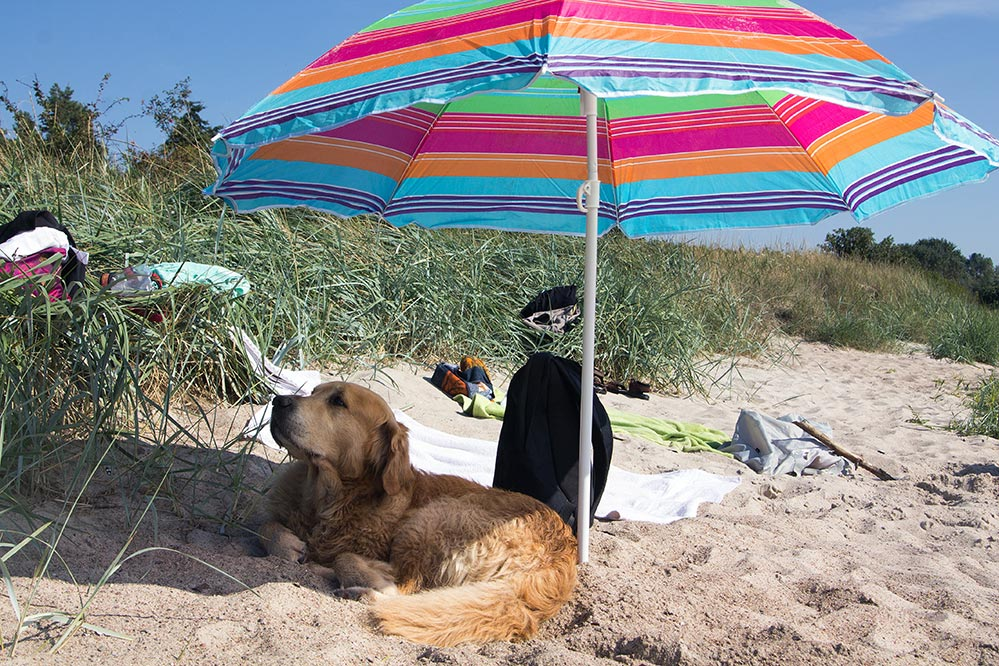 dog sunscreen