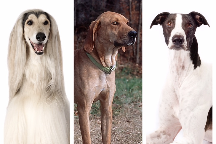 What Were Hound Group Dogs Bred to Do? — American Kennel Club
