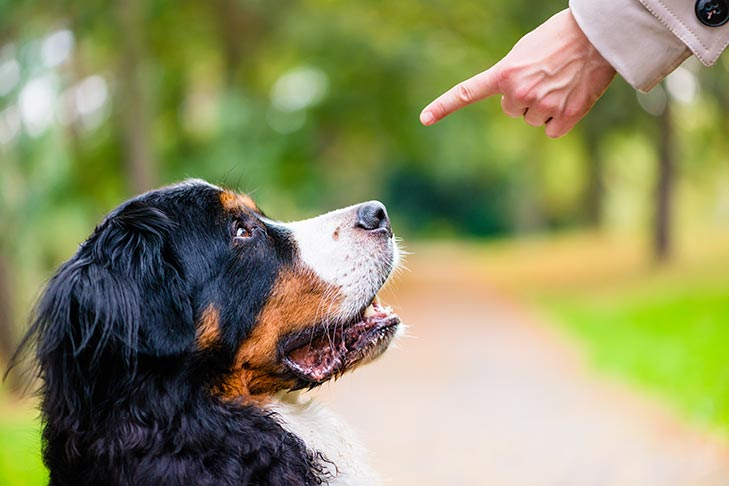 These Common Training Mistakes Might Be Causing Your Dog to Disengage