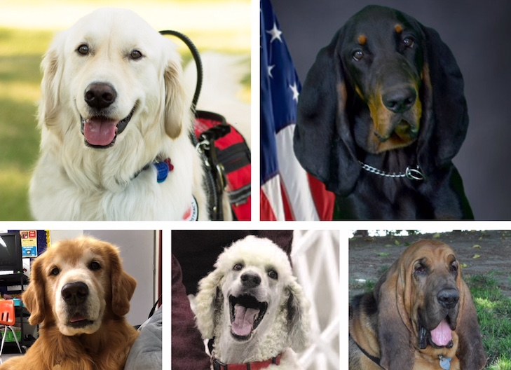 ACE Award Winners 2018: Meet the 5 Dogs Being Honored This Year