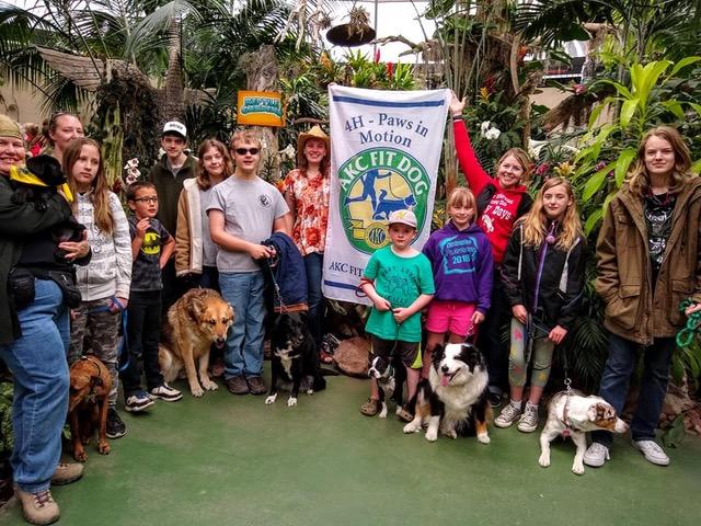 Akc Fit Dog American Kennel Club
