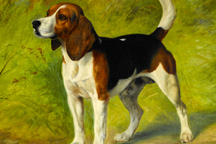 Beagle, Harrier, Foxhound: The Same But Different ...