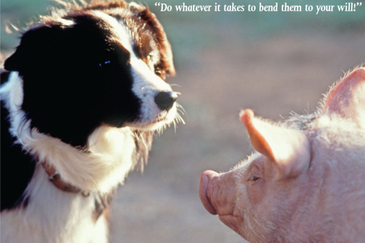 That'll Do, Pig: The Wisdom of Babe – American Kennel Club