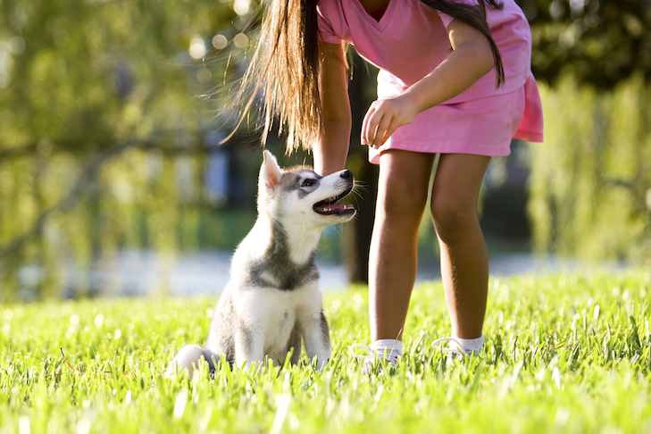 Teach Your Puppy These 5 Basic Cues – American Kennel Club