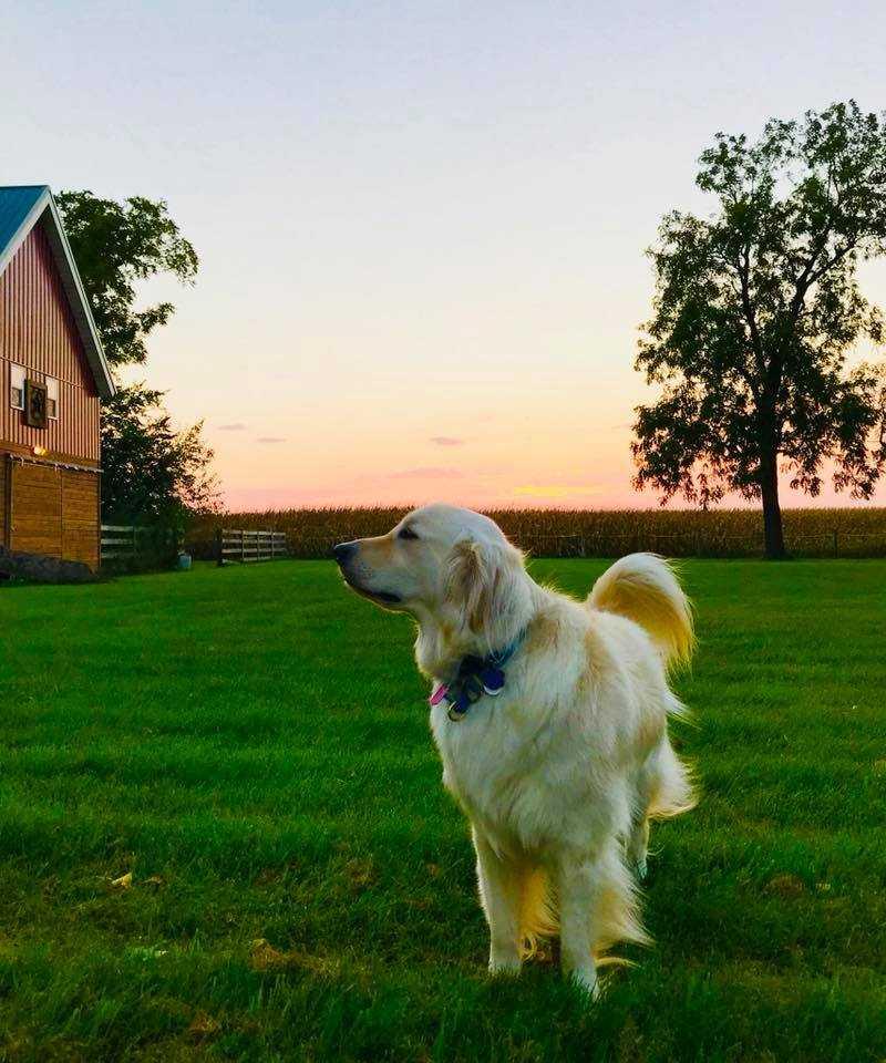 Sampson Service Dog Ace Winner
