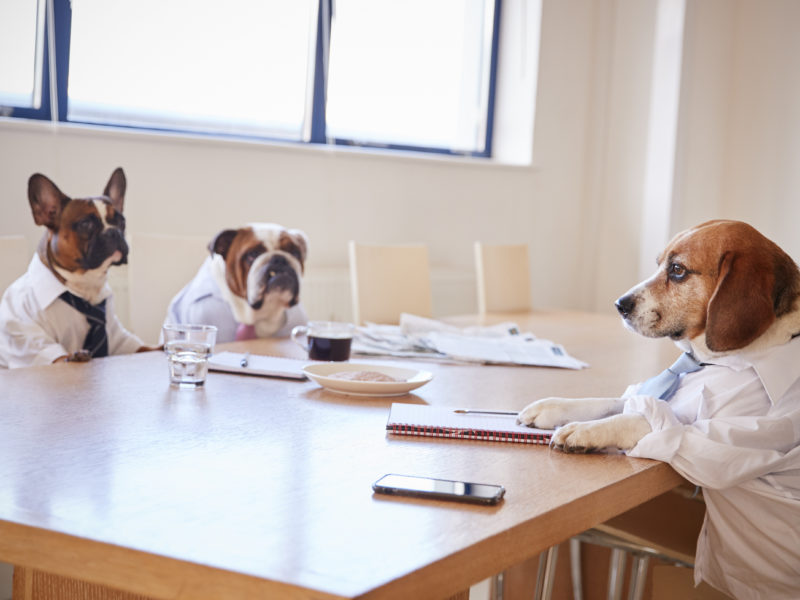 dogs_meeting-800x600.jpeg (800×600)
