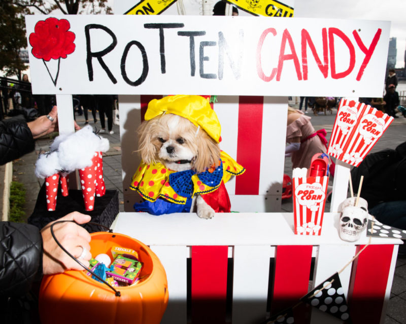East-Village-Dog-Halloween-Rotten-Candy