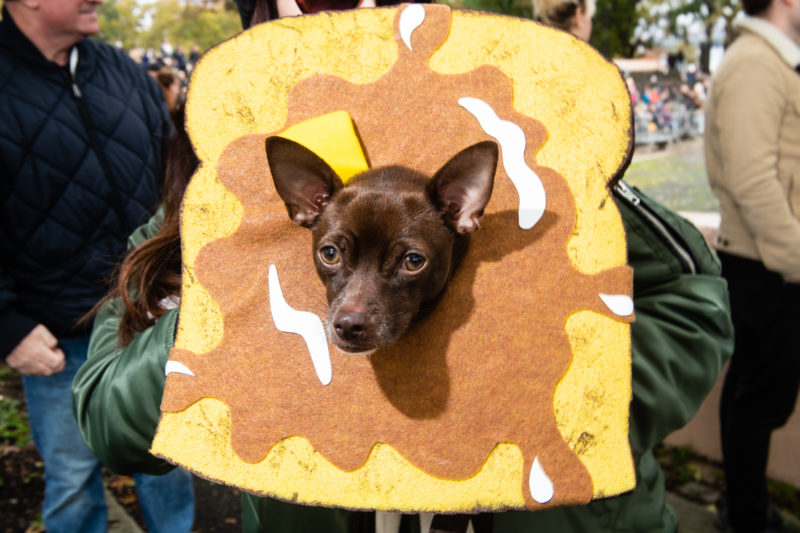 French-toast-dog-halloween-costume