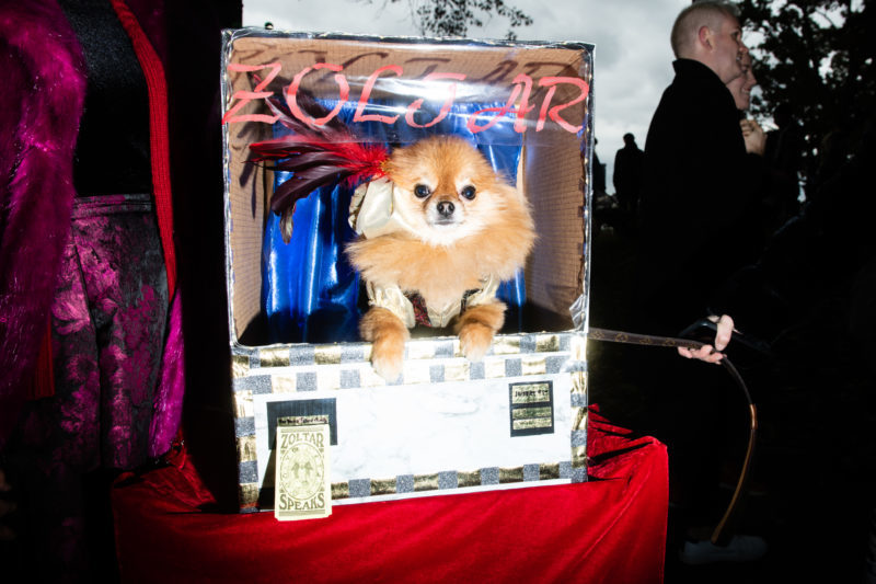 Zoltar-fortune-teller-dog-costume