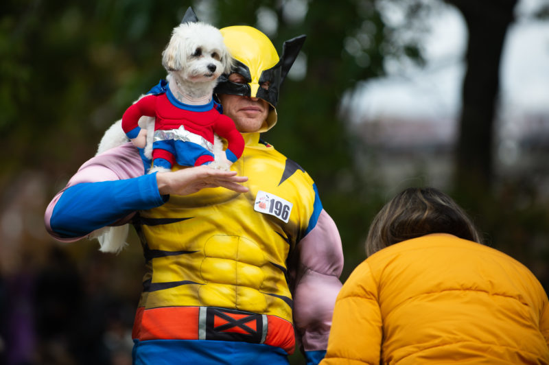 super-hero-dog-costume